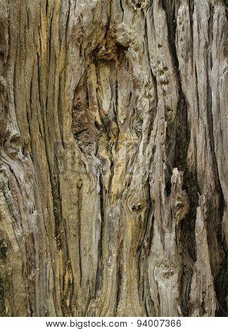 Dead Tree Trunk Texture