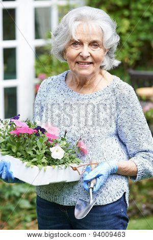 Portrait Of Senior Woman Planting Flowers In Garden