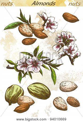 almonds color