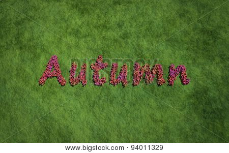 Autumn Text Flower With Grass Background