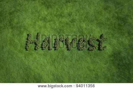 Harvest Text Tree With Grass Background