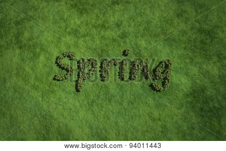 Spring Text Tree With Grass Background