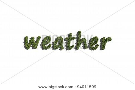 Weather Text Tree With White Background