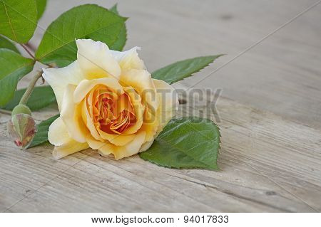 Rose Buff Beauty Peach And Apricot On An Old Wooden Board