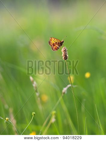 Butterfly In A Meadow In Flowers On Green Background