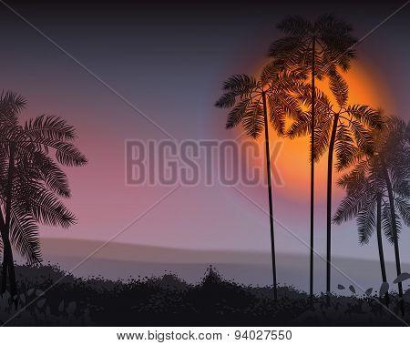 Summer Night. Palm trees in the night. Vector illustration