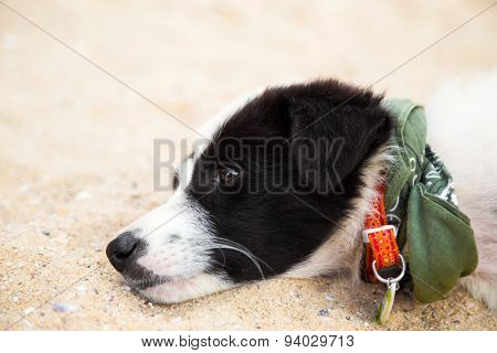 Young Cute Dog Lying On The Beach