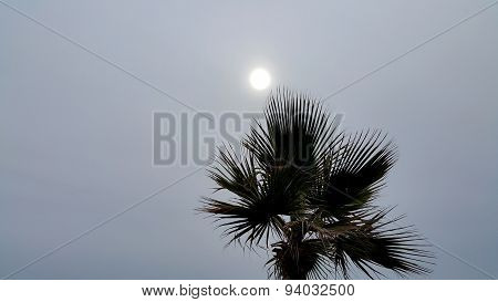 Palm Tree Against A Cloudy Sky With Sun