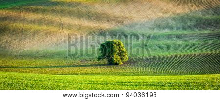 Panorama of lonely tree in Moravian ploughed field rolling landscape, Moravia, Czech Republic