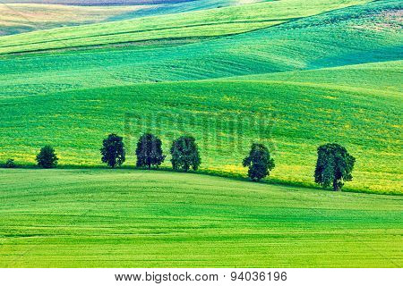 Moravian rolling landscape with trees. South Moravia, Czech Republic
