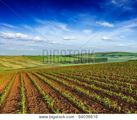 Rolling fields of Moravia, Czech Republic