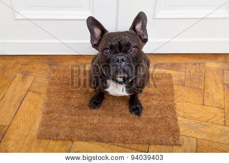Dog Begging For A Walk