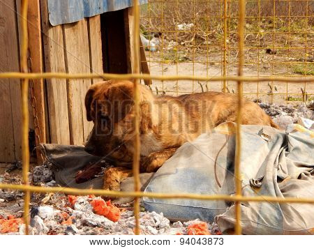 Pets adoption. Homeless dog in kennel
