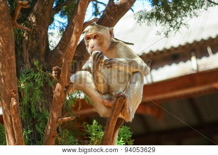Monkey On The Tree