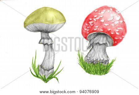 Mushroom Poison