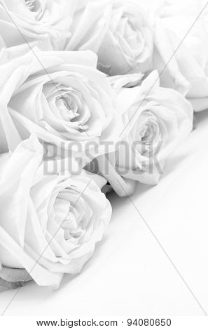 Beautiful White Roses Close-up As Wedding Background. Soft Focus. In Black And White. Retro Style