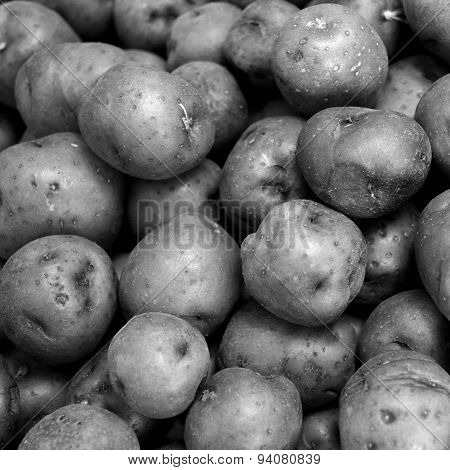 Black And White Red Potato Background In Square Size