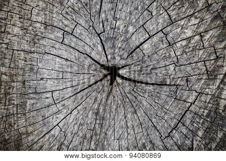 Grey Cut Wood Closeup