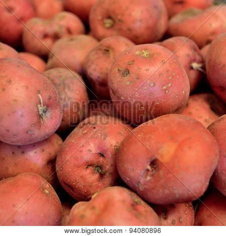 Square Image Of Red New Potatoes