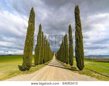 Idyllic Tuscan Landscape With Cypress Alley Near Pienza, Val D'orcia, Italy