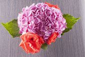 picture of geranium  - Geranium and roses seen from above horizontal image - JPG
