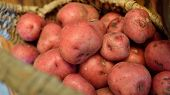 picture of solanum tuberosum  - Letterbox image of basket full of fresh new potatoes locally grown in Florida - JPG