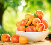 stock photo of orchard  - Apricot - JPG