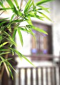 picture of bamboo leaves  - beautiful green bamboo leaves in Chinese garden  - JPG