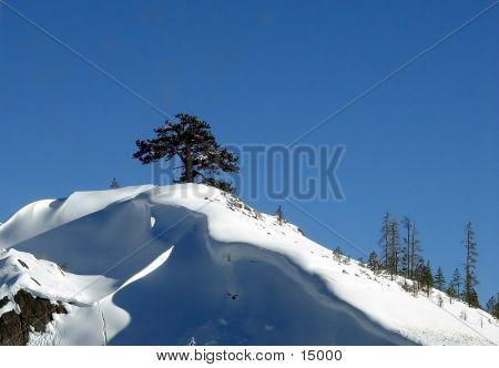 Árbol solitario y la nieve