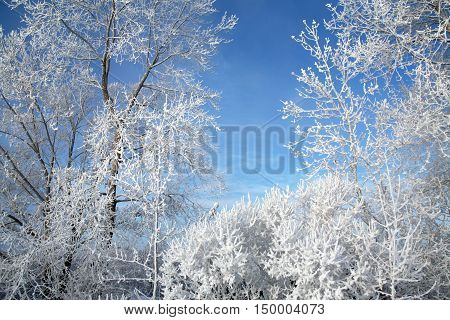 Magical Frost