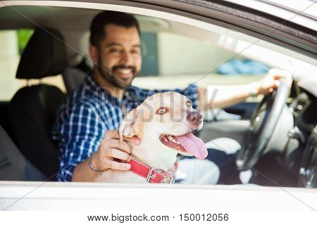Cute Dog Riding In The Passenger Seat