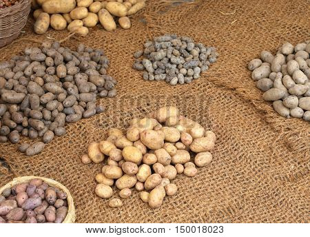 Many Types Of Of Raw Potatoes For Sale
