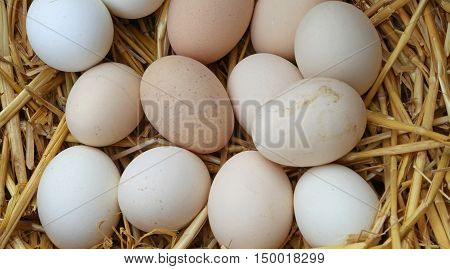 Many Fresh Eggs In The Basket Of The Farm