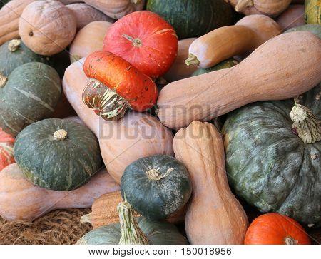 Bunch Of Many Mature Pumpkins