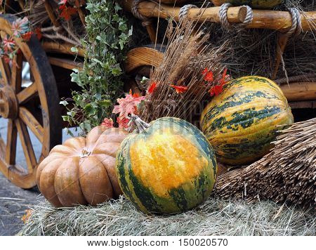Autumn farmer's crop. Many different pumpkins on hay