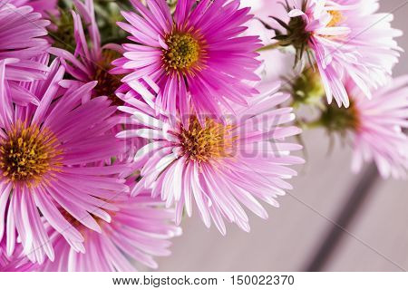 Pink Daisies In A Bunch