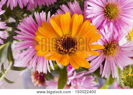 Yellow Daisy In A Bunch