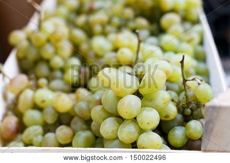 White Grapes At The Market.