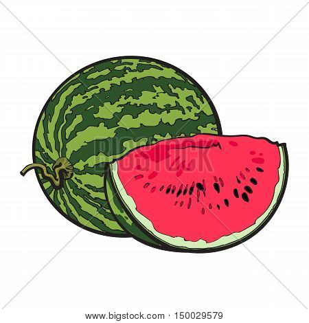 Ripe and juicy watermelon, vector illustration isolated on white background. Drawing of fresh watermelon, whole and a slice, vegetarian snack