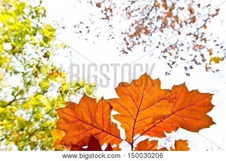 autumn background with blades on the sky