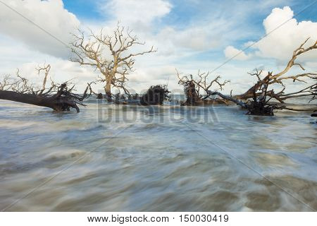 Fallen trees covered by fast flowing water from tidal flood