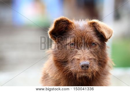 Cute stray dog portrait with blurred background
