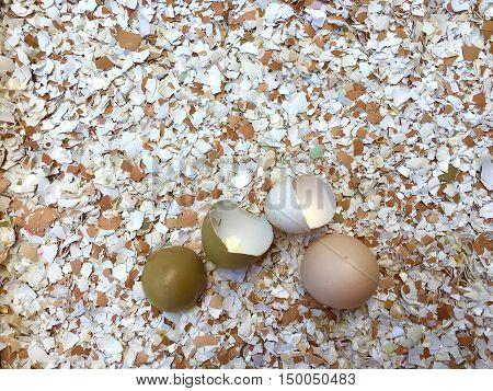 Many small pieces of broken eggshells in closeup