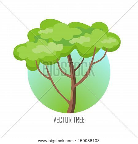Tree with green leaves. Vector tree round icon. Tree forest, leaf tree isolated, tree branch nature green, plant eco branch tree, organic natural wood illustration. Vector illustration