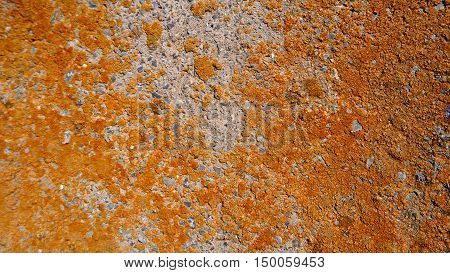 Dry Orange Lichen on cement wall background, selective focus