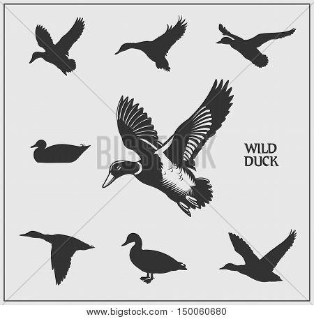 Vector set of wild ducks. Monochrome design.