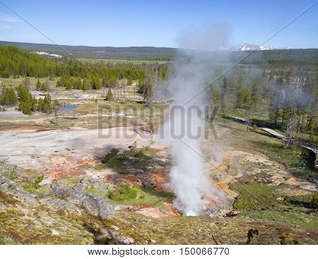 Geyser eruption in landscape variably covered by mineral deposits rock forest and mountains at Yellowstone National Park USA