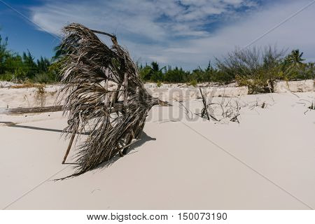 The picturesque snags sticking out of the waters of the Caribbean Sea on the beach of the island of Cayo Largo, Cuba