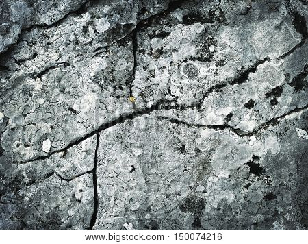 abstract background or texture Cracks line the limestone rock