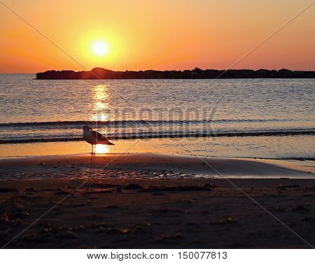 Horison on the sea. Sea in evening. Seagull in sunset.